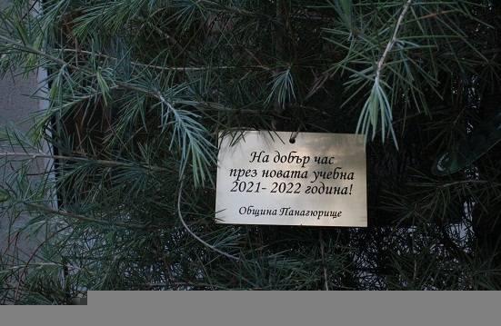 Община Панагюрище отново дарява дръвчета за засаждане на всички учебни заведения за новата учебна година